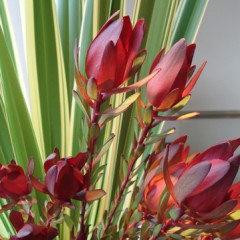 ラリック「オラン」と花