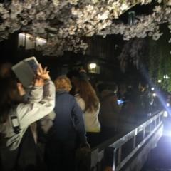 京都桜速報