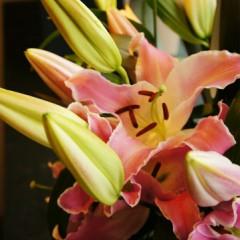 ユリの花。