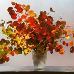 満作の紅葉