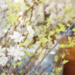 桜 & シルバーオーバレイupしました。